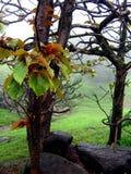 Exotische Monsune Stockbild