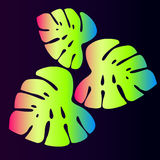 Exotische neonbladeren Stock Afbeelding