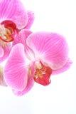 Exotische orchideeën stock afbeeldingen