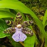 Exotische Orchidee royalty-vrije stock afbeeldingen