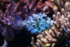 Exotische overzeese vissen royalty-vrije stock foto's