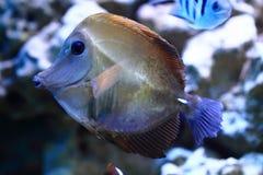 Exotische overzeese vissen royalty-vrije stock afbeeldingen