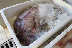 Exotische overzeese vissen Stock Afbeelding