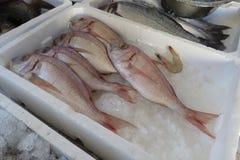 Exotische overzeese vissen Stock Afbeeldingen