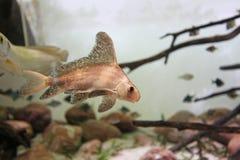Exotische overzeese vissen in aquarium, Rusland royalty-vrije stock afbeeldingen