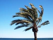 Exotische Palme an einem windigen Tag Stockfotografie