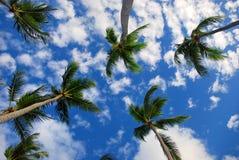 Exotische Palme im Himmel Stockbild