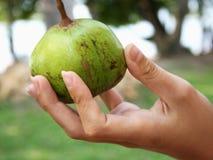 Exotische Palmen-Startwerte für Zufallsgenerator in der Jacke lizenzfreies stockfoto