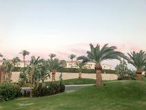 Exotische paradijsbomen, installaties, tropische zuidelijke grote palmen met grote groene bladeren en sterke sterke boomstammen i royalty-vrije stock fotografie