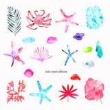 Exotische Reisesammlung auf dem weißen Hintergrund: eine Niederlassung mit Blättern, eine Krabbe, tropische Anlagen, Starfishes,  stockbild