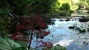 Exotische rode bloem en installaties in Franse Polynesia op het Eiland van Tahiti stock video
