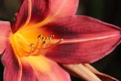 Exotische rote gelbe Blüte Lizenzfreie Stockfotos
