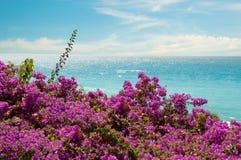 Exotische roze bloemen en overzees Royalty-vrije Stock Afbeeldingen