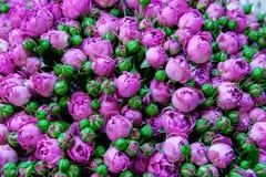 Exotische rozen van lilac elite moderne verscheidenheden in het boeket als gift Achtergrond Selectieve nadruk royalty-vrije stock afbeeldingen