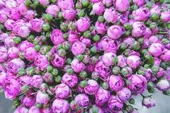 Exotische rozen van lilac elite moderne verscheidenheden in het boeket als gift Achtergrond Selectieve nadruk stock fotografie