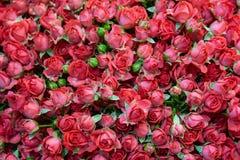 Exotische rozen van scharlaken rode elite moderne verscheidenheden in het boeket als gift Achtergrond Selectieve nadruk royalty-vrije stock afbeeldingen