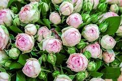 Exotische rozen van scharlaken rode elite moderne verscheidenheden in het boeket als gift Achtergrond Selectieve nadruk royalty-vrije stock fotografie