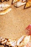 Exotische Shells Stock Fotografie