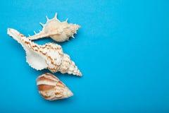Exotische shells op een blauwe achtergrond, het concept de zomervakantie De ruimte van het exemplaar royalty-vrije stock afbeeldingen