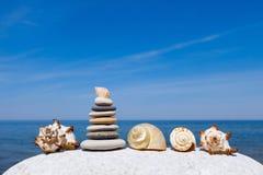 Exotische shells op het overzees en de blauwe hemelachtergrond Ruimte voor tekst Royalty-vrije Stock Foto's