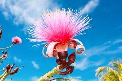 Exotische Sonnenscheinblüte Stockfotografie