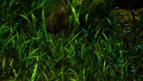 Exotische tiefe sehen Fische stock video