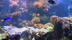 Exotische tiefe sehen Fische stock video footage