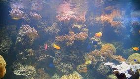 Exotische tiefe sehen Fische stock footage