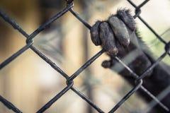 Exotische Tiere im Gefangenschaftskonzept Lizenzfreie Stockbilder