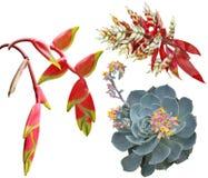 Exotische tropische bloemen royalty-vrije stock foto