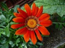 Exotische tropische bloemen Stock Foto
