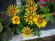 Exotische tropische bloemen Stock Foto's