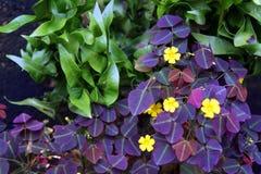 Exotische tropische bloemen Royalty-vrije Stock Fotografie