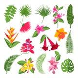 Exotische tropische bloemen en bladeren Vectorillustraties van installaties stock illustratie