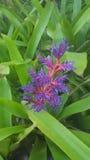 Exotische tropische Blume Lizenzfreies Stockbild