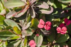 Exotische tropische Blumen Stockbild