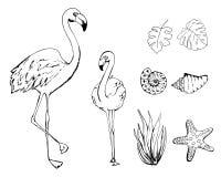 Exotische tropische vogels - flamingo, reeks vectorillustraties van de schetsstijl die op witte achtergrond worden ge?soleerd Ree stock illustratie