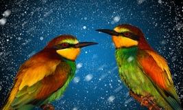 Exotische Vögel auf neues Jahr ` s Hintergrund Lizenzfreie Stockfotografie