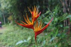 Exotische Vegetation der roten Blume naß nach dem Regen Stockbild