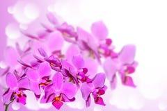 Exotische violette orchideebloemen op vage gradiënt Stock Afbeelding