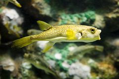 Exotische vissen stock afbeelding