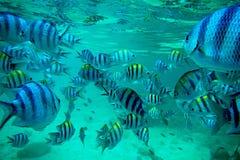 Exotische vissen, Gr Nido Filippijnen royalty-vrije stock afbeeldingen
