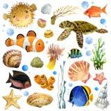 Exotische Vissen, koraalrif, algen, stock illustratie