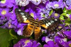 Exotische vlinder. royalty-vrije stock fotografie