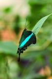 Exotische vlinder. stock afbeelding