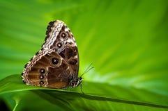 Exotische vlinder. royalty-vrije stock afbeelding