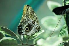 Exotische vlinder Royalty-vrije Stock Afbeeldingen
