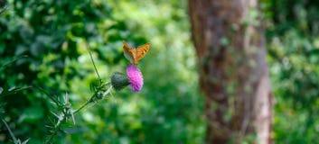 Exotische vlinder Stock Foto