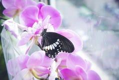 exotische vlinderzitting Royalty-vrije Stock Fotografie