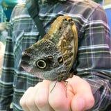 Exotische vlinderzitting op een mensen` s hand Stock Foto